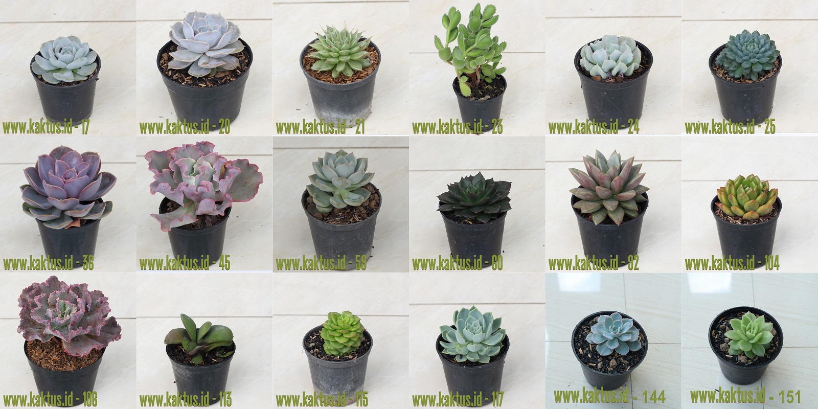 Succulents Package